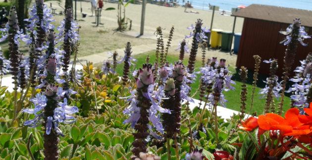 playa-malapesquera-flores-benalmadena-costa-1